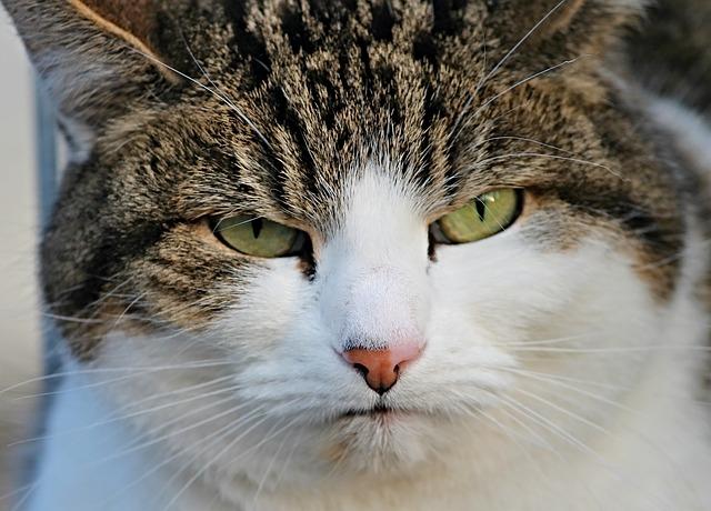 cat-3171124_640