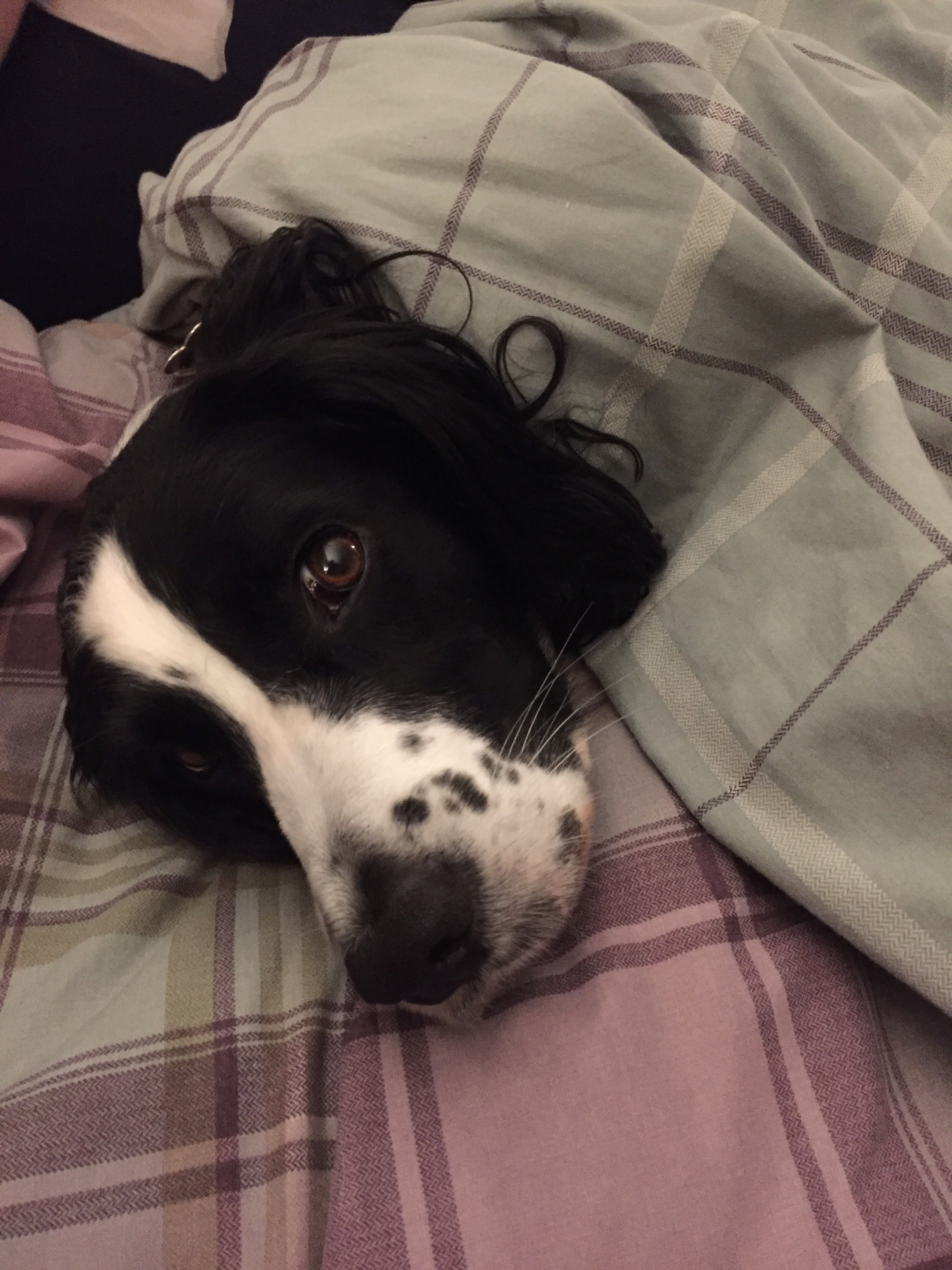 Ella Sleep