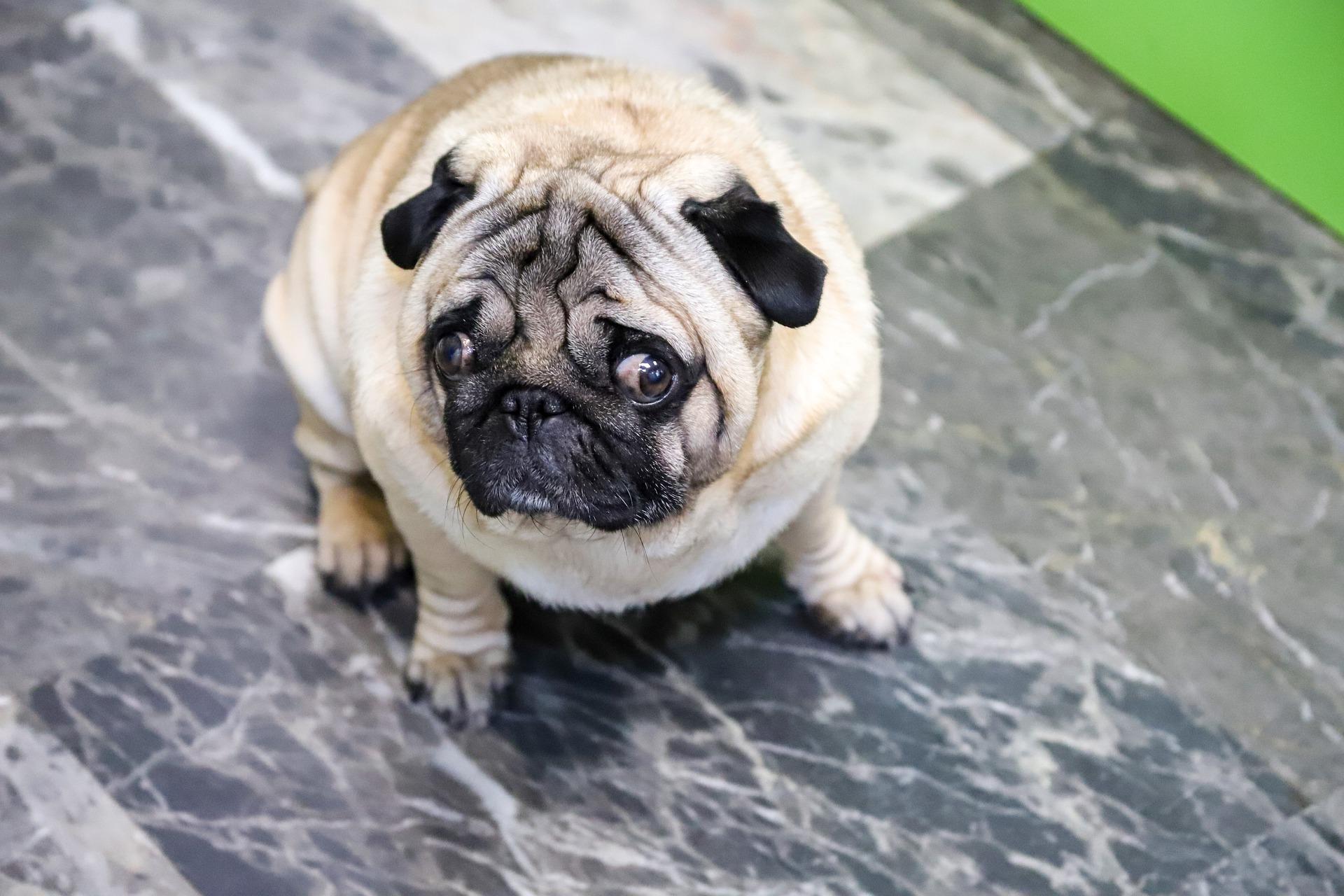 dog-4906676_1920